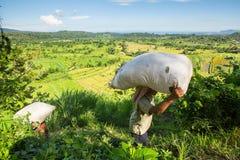 De landbouwers dragen zakken van gebied met gras Royalty-vrije Stock Afbeelding