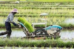 De landbouwers planten rijst in het landbouwbedrijf stock foto