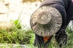 De landbouwers planten rijst in het landbouwbedrijf royalty-vrije stock foto's