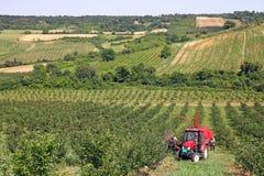 De landbouwers van de kersenboomgaard met tractor en het oogsten machine Royalty-vrije Stock Afbeelding
