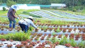 De landbouwers werken aan landbouwbedrijf stock afbeelding