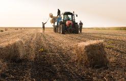 De landbouwers werpen hooibalen in een tractoraanhangwagen - balen van tarwe Stock Foto's