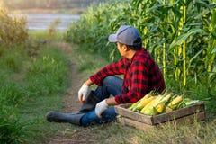 De landbouwers zitten om de moeheid naast de houten kratten met organische suikermaïs op de graangebieden te ontspannen stock foto's