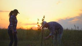De landbouwersman en de vrouw, landbouwers koppelen het planten van boomzaailing op gebied bij zonsondergang of zonsopgang Silhou stock video