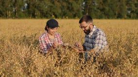 De landbouwerswerken op een kikkererwtengebied, gebruiken digitale tablet stock video