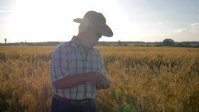 De landbouwerszakenman in cowboyhoed op het gebied controleert het rijpen van korrelgewassen stock videobeelden