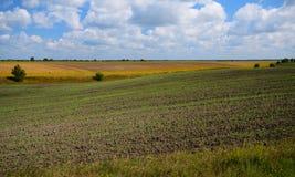De landbouwgebieden tijdens dag Stock Foto's