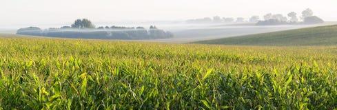 De landbouwgrond Royalty-vrije Stock Afbeeldingen