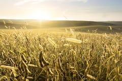De landbouwgrond Stock Foto's
