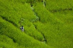 De landbouwgrond van het het heiligdomsdorp van Annapurna Royalty-vrije Stock Fotografie