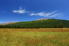 De Landbouwgrond van Nieuw Zeeland op een Mooie de Zomersdag Royalty-vrije Stock Foto's