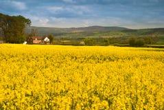 De Landbouwgrond van Shropshire stock afbeelding