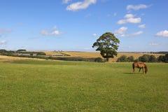 De landbouwgrond van Yorkshire wolds Royalty-vrije Stock Foto