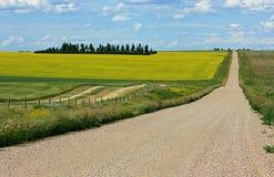 De Landbouwgronden van Alberta Stock Foto