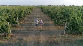 De landbouwindustrie, gelukkige ouders met de handen die van de peuterholding langs appel lopen tuiniert tussen rijen stock footage