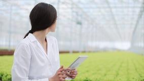 De landbouwingenieur in serre die witte laag dragen die ot tablet computer om broek` s gezondheid te testen en gegevens te analys stock video