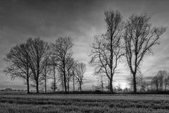 De landelijke bomen van het landschapsverstand en een mooie zonsondergang, Weelde, België royalty-vrije stock foto