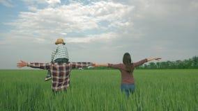 De landelijke familie, gelukkige vader met jong geitjejongen op schouders en mum loopt op groen tarwegebied stock videobeelden