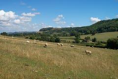 De landelijke manier van landschapscotswold Royalty-vrije Stock Afbeelding
