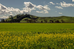 De landschappen na de regen een wenk van de lente komt aan royalty-vrije stock foto
