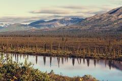 De landschappen van Alaska Stock Afbeeldingen