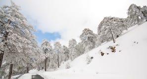 De Landschappen van de winter Stock Fotografie