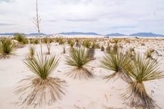 De Landschappen van New Mexico Royalty-vrije Stock Afbeelding