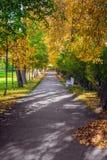 De landschaps gouden herfst in Alexander Park van Pushkin Stock Afbeelding