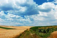 De landweg van het platteland Royalty-vrije Stock Foto's