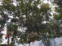 De lange banyan hemel van bomenaanrakingen stock foto's