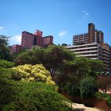 De lange bomen van Johannesburg Zuid-Afrika stock fotografie