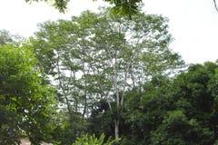 De lange bomen vertegenwoordigen hoge hoop stock foto