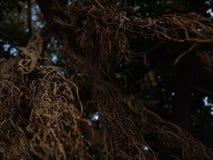 De lange close-upmening van exotische boom vertakt zich in bruin met selectieve nadruk met bokeh royalty-vrije stock afbeelding