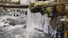 De lange ijskegels hangen boven donker koud water van bergrivier De ijskegels schitteren boven melkachtig water van stroom Takken stock videobeelden