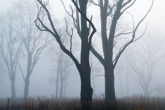 De lange Prairie van het Gras in Mist stock afbeeldingen
