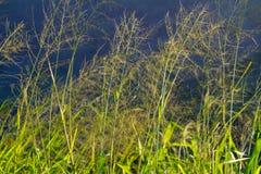 De lange Samenvatting van het Gras Royalty-vrije Stock Foto