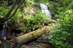 De lange waterval van de blootstellingszomer in bos stock afbeelding