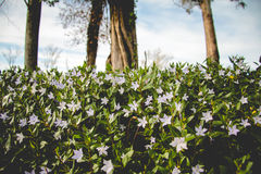 De langzaam verdwenen lente Stock Foto
