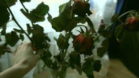 De langzaam verdwenen tribune van bloemenrozen in een vaas stock footage