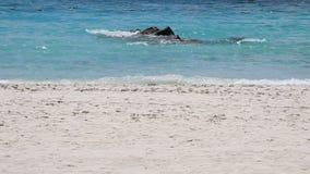 De langzame golven die van de motielengte op rotsen en strand breken stock video