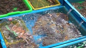 De langzame Motie Aziatische vrouw zette een rode krab in containers De tribune van de zeevruchtenmarkt stock videobeelden