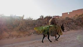 De Langzame Motie FHD van Marokko van de ezelsmens stock video