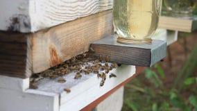 De Langzame Motie van de bijenkorfingang stock video