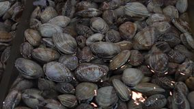 De langzame motieverkoper verkoopt Tweekleppige schelpdieren in de Jagalchi-Vissenmarkt in Busan stock video
