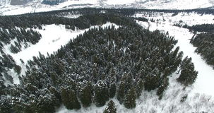 De langzame vlucht van een hommel over een snow-covered naaldbos onder de bergen in 4K stock footage