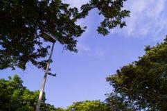 De lantaarnpaal in een park Stock Foto