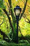De Lantaarnpaal van het park Stock Fotografie