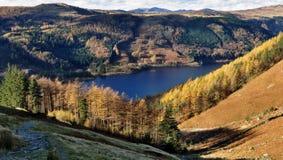 De Lariksen van de herfst, Thirlmere Royalty-vrije Stock Afbeeldingen