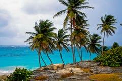 De las palmeras bahía Barbados en la parte inferior Imágenes de archivo libres de regalías