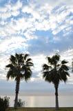 De las palmeras orilla cerca del mar Imagen de archivo
